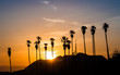 Palm Trees in Hollywood at sunset