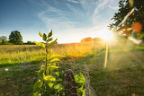 Green grass with plants and trees on sunset view. background image - 223094792
