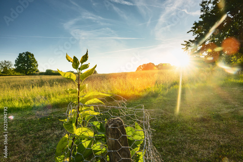 Leinwanddruck Bild Green grass with plants and trees on sunset view. background image