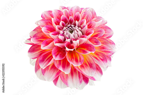 Aster kwiat głowy zbliżenie