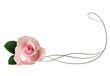 Realistic pink rose, border.