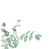 Watercolor floral card with eucalyptus branch. Hand drawn botanical illustration. Art background - 223130708
