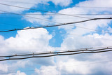 Electrical wires against the sky with clouds - 223136188