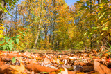 Footpath in a forest in autumn, ground view with orange leaves