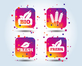 Natural fresh Bio food icons. Gluten free agricultural sign symbol. Colour gradient square buttons. Flat design concept. Vector - 223158366