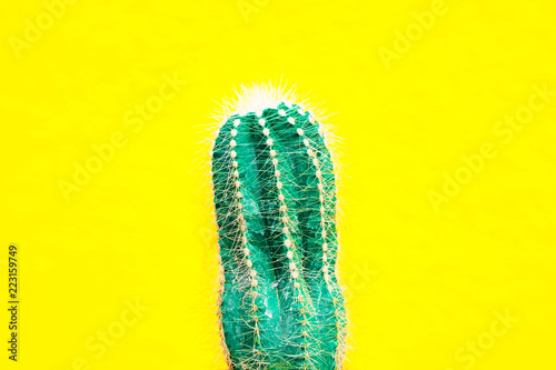 Leinwandbild Motiv closeup green Cactus on yellow  background . Fashion pattern. Art Gallery Minimal.