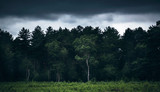 Summer forest with dark moody sky. - 223161591