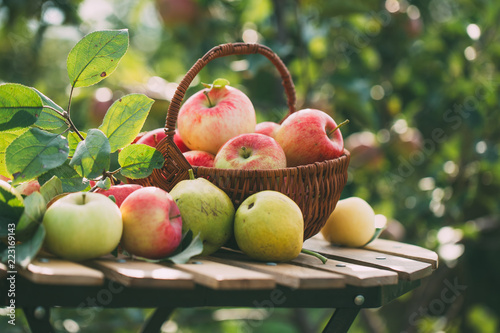 Organic apples and pears in basket on a wooden table, outdoors. - 223169143