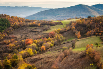 Autumn forest / Amazing autumn view of a mountain meadows in the central part of Balkan Mountains, Bulgaria