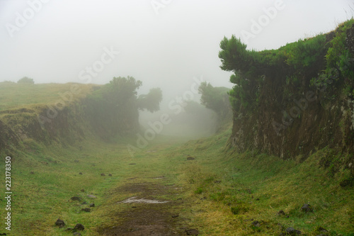 Foto Murales Pfad im Nebel