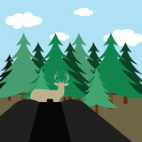Hunting in fir forest
