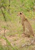 wildlife on safari - 223216941