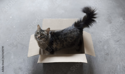 Cute cat playing in a carton box