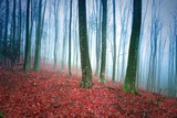 Foggy beech forest landscape with red leaves on the ground. - 223242777