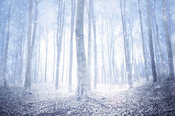 Magical winter season snowy foggy forest.