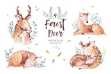 Cute watercolor baby deer animal , nursery isolated illustration for children clothing, pattern. WatercolorHand drawn boho image Perfect for phone cases design, nursery posters, postcards - 223247780