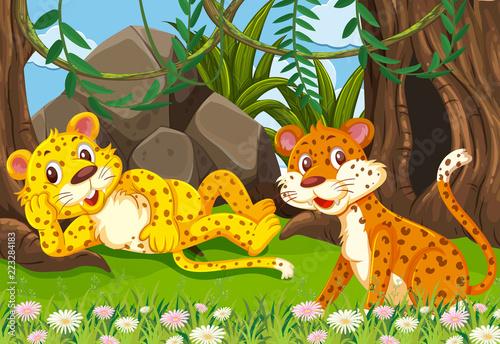 Lampart w dżungli