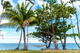 Empty hammock on the beach, Fiji - 223297786