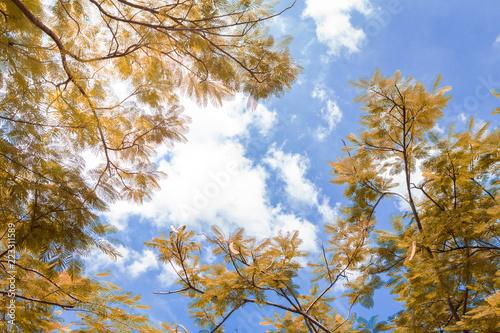 Żółte liście na niebie