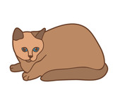 brown cat on a white background