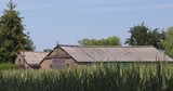 Dutch countryside, corn field in summer breeze, wooden barns with asbestos roof. In Holland it will be prohibited by law to have any roofs with traces of asbestos in them by 2024. - 223316927