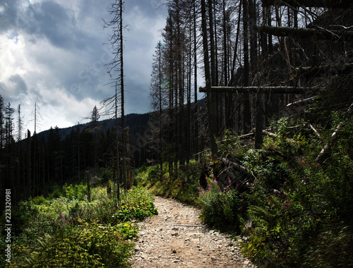 stone pavement between the broken trees - 223320981