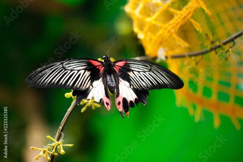 Butterfly Sitting On Branch - 223325385