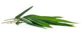 Leaf of Bamboo isolated on white background