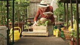 Wide shot with tilt up of retired woman with grey hair wearing straw hat working in rustic greenhouse: she is putting potted seedlings into wooden crate and making notes - 223339142