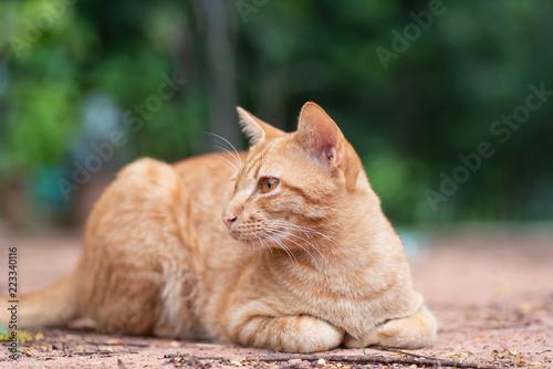 Side view of ginger cat sitting on the ground in the garden