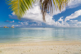 Palm leaves over blue sea, idyllic sea view. Vacation and travel concept, for tourism and holiday concept - 223352951