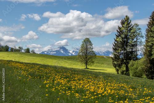 Foto Murales Bavaria, Germany