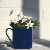Bunch of white wild anemone flowers in blue mug. Concept of spring, nature and rural life. White brick wall and wooden table. Copy space. Selective focus. - 223382752