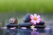 Quadro Black spa stones and pink cosmos flower isolated on green.