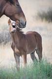 Wild Horses of Utah - 223401719