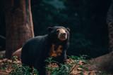Sun + Bear = Sun bear