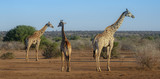 african landscape - 223422943