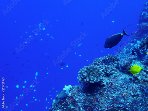 Leinwandbild Motiv Coral Reef in Blue with Tropical Fish Ridgeline with Blue Background