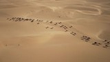 Aerial shot of a camel big heard crossing the desert - 223441948