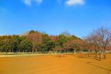 青空と畑の風景1