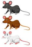 Three different colour of rat - 223468700