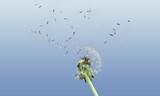 Nature flower dandelion