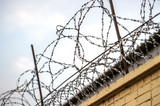 Barbed metal wire - 223479590