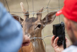 People photograph a deer at the zoo - 223488756