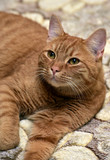 red cat lying on the couch - 223501324