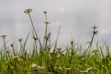 Wild flowers in the countryside, with a shallow depth of field - 223503136