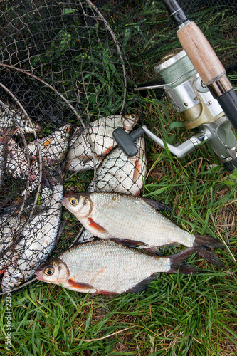 Czarna sieć rybacka z catched słodkowodną ryba i dwa leszcza lub srebnej ryba na zielonej trawie. Wędka z rolką i słodkowodna ryba na naturalnym tle.