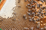 Busy bees, close up view of the working bees on honeycomb. . - 223508560