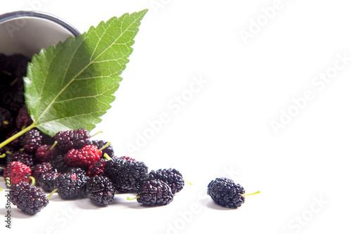 Biała filiżanka z czarną morwy owoc i liść odizolowywający na bielu.