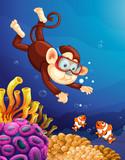 Monkey diving under ocean